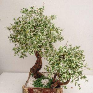 bonsai 8